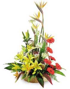 Cảm ơn em HV-0418_GIOHOA-0127(ID: HV-0418_GIOHOA-0127)