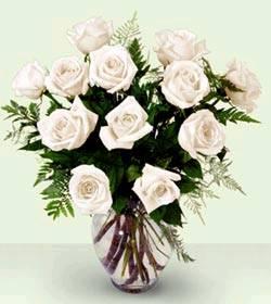 Hoa hồng trắng HV-A-026(ID: HV-A-026)