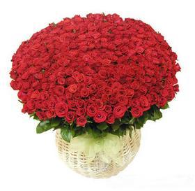 HV-NH-L-323 365 roses(ID: HV-NH-L-323)